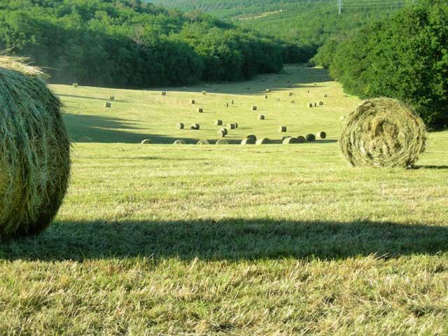 Hay Season