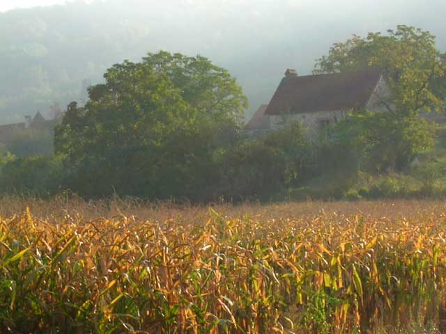 Morning Mist, Cornfields In Fall